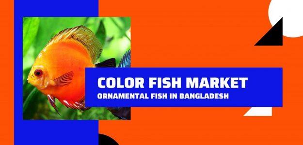 Color Fish Market